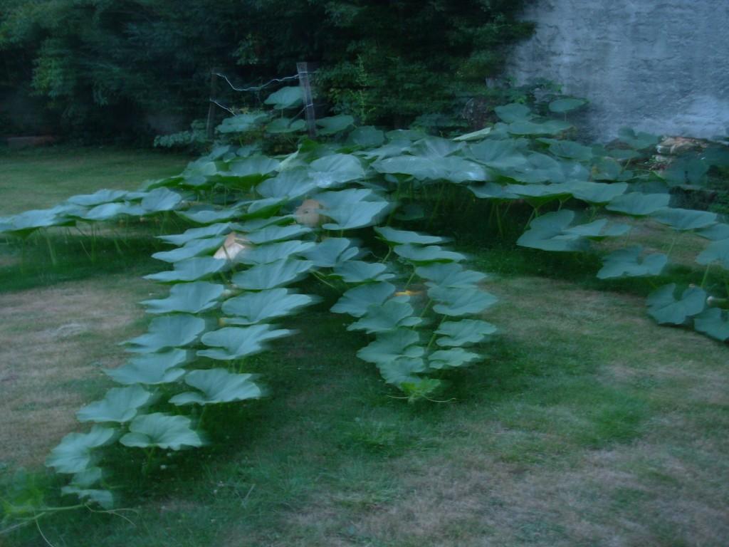 Schön gestalteter Garten Eden in Ossun