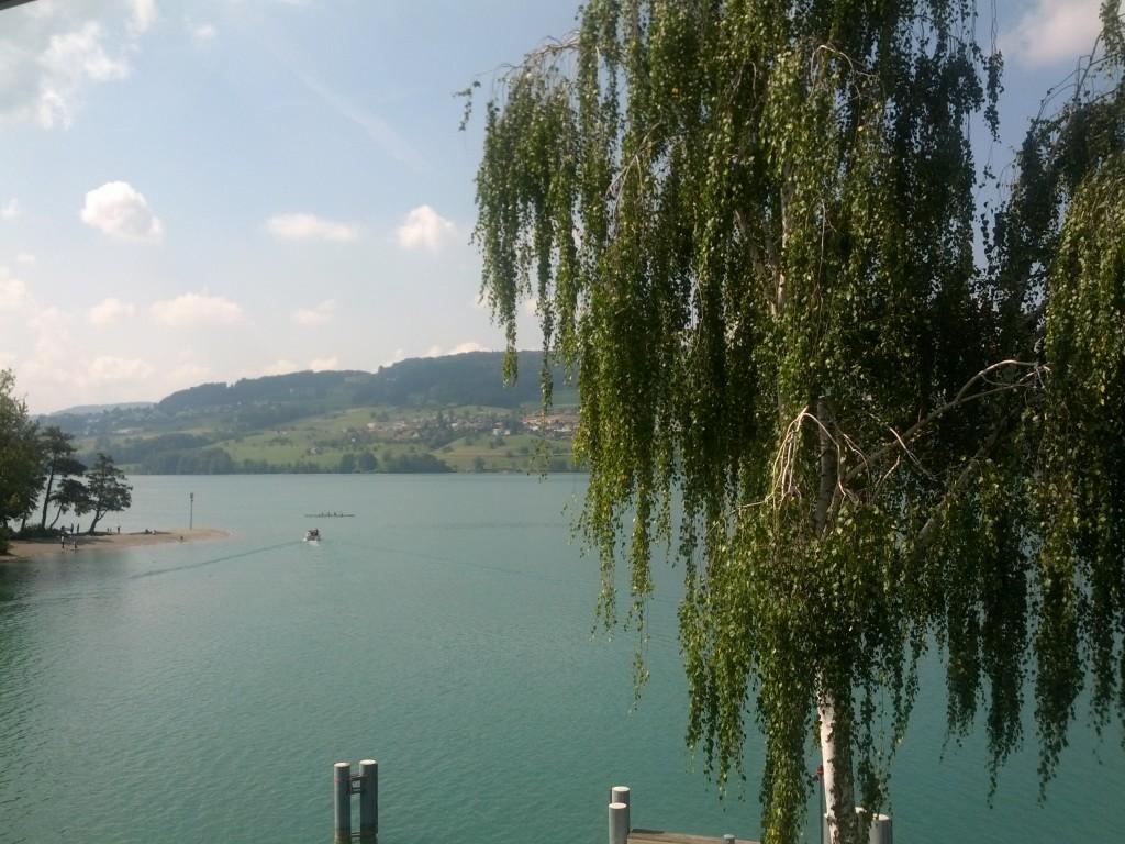 Ufer Hallwilersee