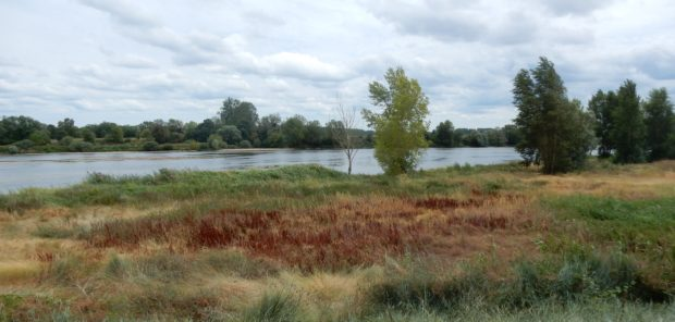 Unverbaute Loire