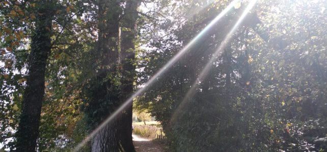 Wanderung am Hallwilersee